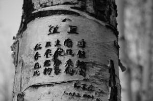 tree-615663_640